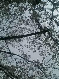 Pa0_0296_2